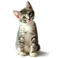 Подсказки для определения цвета котёнка