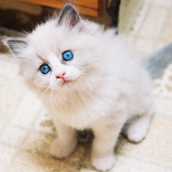 Воспитание и кормление котенка