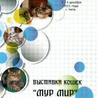 WCF Чита 3-4 декабря 2011