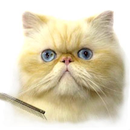 Желез у кошки авитаминоз у кошки плеш