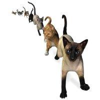 Самые популярные породы кошек – 2008-2011