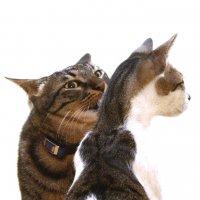 Элементарный уход за кошкой