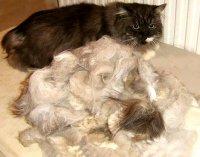 Груминг персидских кошек