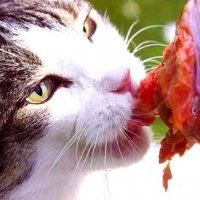 Основной рацион домашнего хищника