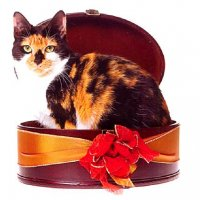 Как подарить кошку. «Вредные советы»