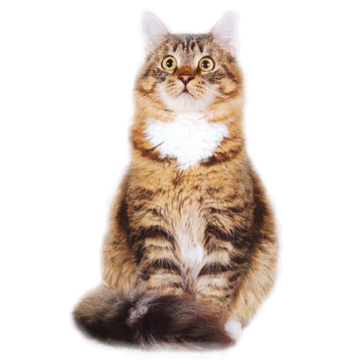 Zcats загадочные кошки коты и котята