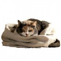 Котенок в мешке:  достаньте и посмотрите