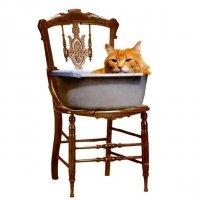 12 стульев для кошки