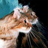 Как у котика усы удивительной красы