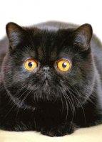 Жил да был чёрный кот за углом