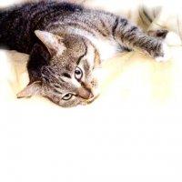 Стерилизация кошки - два подхода к одной проблеме