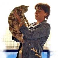 Формирование питомника кошек