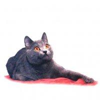 Шартрё — кошка с улыбкой Джоконды