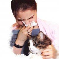 Аллергия. Кто виноват и что делать?