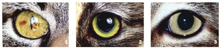 Ах, эти желтые глаза!
