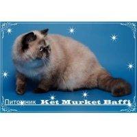 Питомник экзотических короткошерстных и персидских кошек «Ket Murket Baffi»