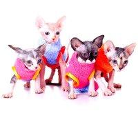 Канадские сфинксы - кошки-привереды