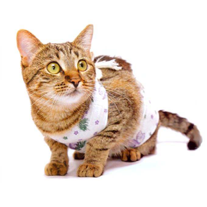 Стерилизация кошек в барнауле цена - 8