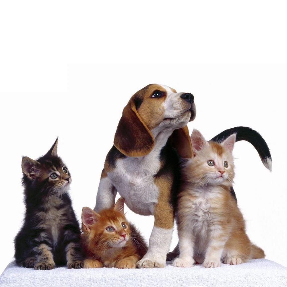 как знакомить кошек с собакой