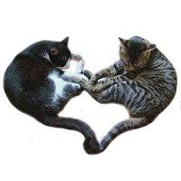 Кошачий фэн-шуй
