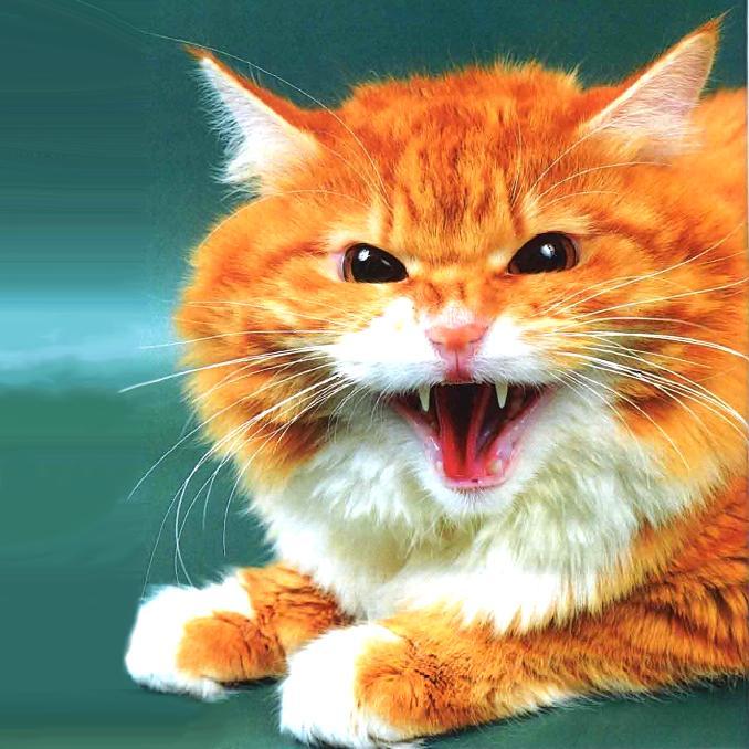 Лечение домашней кошки